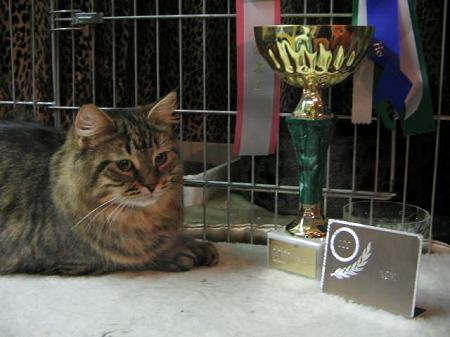 Siberian cat  Amante's Ermelinda aka Hulda - black mackerel tabby female - Best in Show on Feb. 26, 2005
